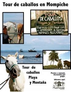 Horseback riding Mompiche - The Mudhouse Hostel